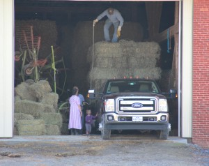 Hubby and my dad had lots of help loading hay :)