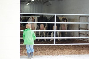 Tristan spends alot of time watching the cows!