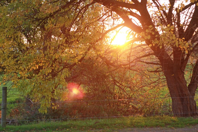 jenna, fall 032_edited-1