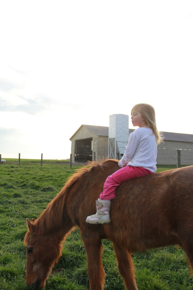 Our gentle pony..